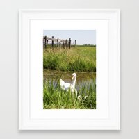swan Framed Art Prints featuring Swan by Kakel-photography