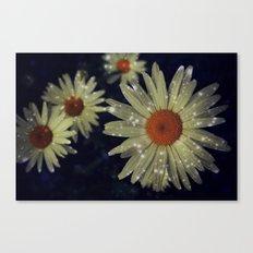 Light up Daisies Canvas Print