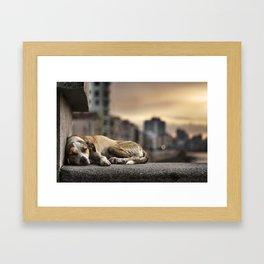 Shhhleep Framed Art Print