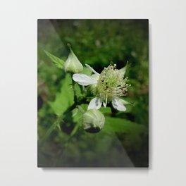 Raspberry Blossom Metal Print