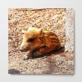CArt wild boar baby Metal Print