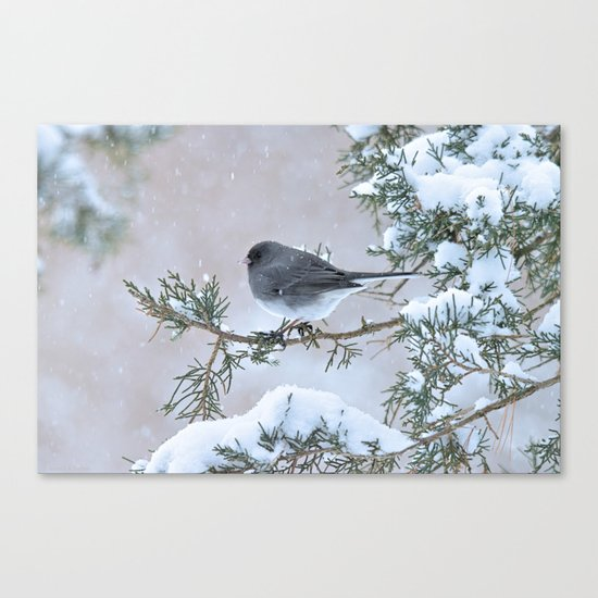 Snow Day Junco Canvas Print