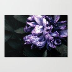 the purple lady Canvas Print