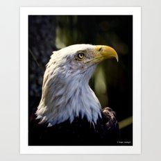 Proud Bald Eagle Art Print
