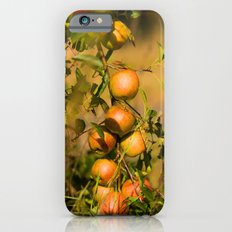 Fresh apples from the tree Slim Case iPhone 6s