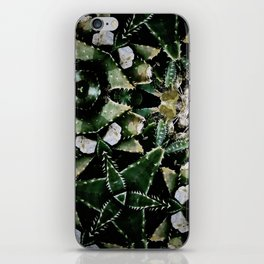 Succulents on Show No 1 iPhone Skin