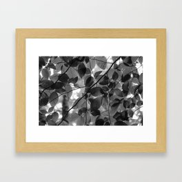 Looking up in the Woods Framed Art Print