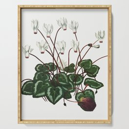 The Persian Cyclamen illustration Serving Tray