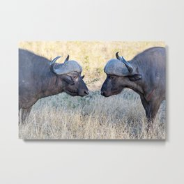 Eye to Eye Metal Print