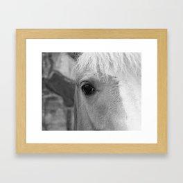 Black and White Horse Art Photography Framed Art Print