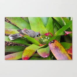The nature of bird Canvas Print