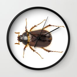 "cockchafer or june beetle ""Amphimallon solstitialis"" species Wall Clock"