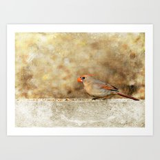 Female Cardinal Art Print