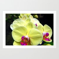 Aligned Orchids Art Print