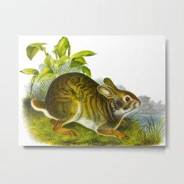 Swamp Hare Squirrel Vintage Scientific Illustration Metal Print
