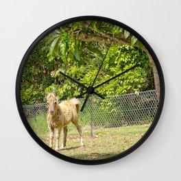 Mischievous miniature horse foal Wall Clock