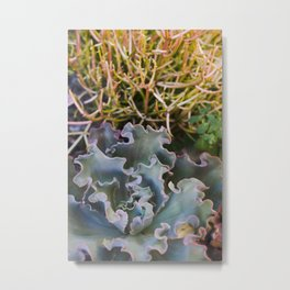 Succulents on Fire Metal Print