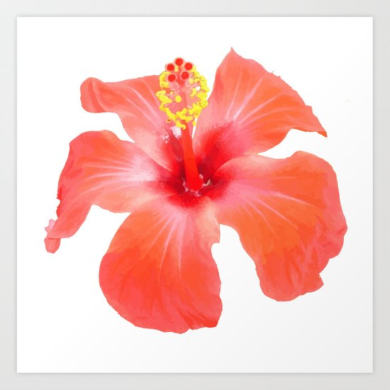 Red Hibiscus Vector Isolated Art Print