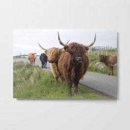 Highland cows on the Isle Metal Print
