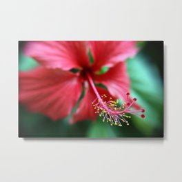 Jamaican Blossom Metal Print