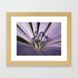 Chicory, Up Close & Personal Framed Art Print