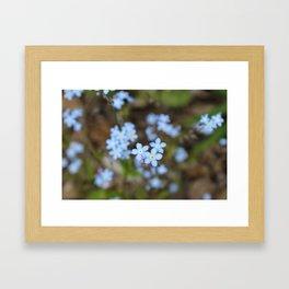 Forget-Me-Nots Three Framed Art Print