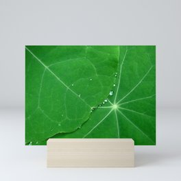 Nasturtium Dew Mini Art Print