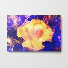Eerie purple and yellow Poppy blossom Metal Print