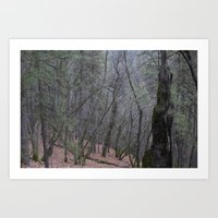 Northern Cali Woods Art Print