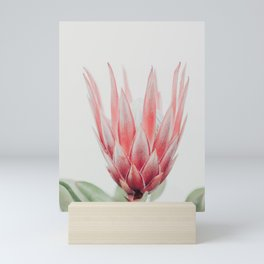 King Protea flower Mini Art Print