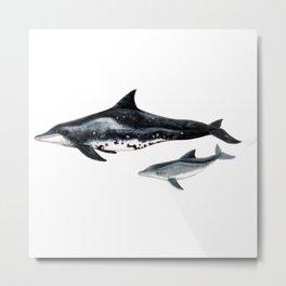 Rough-toothed dolphin (Steno bredanensis) Metal Print