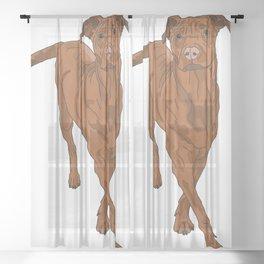 Dog Portrait 2 Sheer Curtain