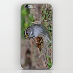 A White Throated Sparrow iPhone & iPod Skin