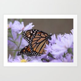 Monarch Beauty Art Print