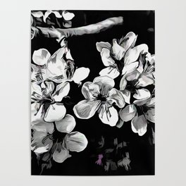 Spring Time Blossoms In Black And White Poster