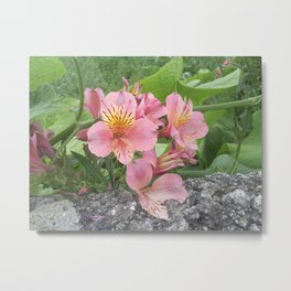 small flowers of tenerife Metal Print