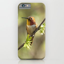 Male Rufous Hummingbird on a Branch iPhone Case