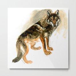 Iberian Wolf (c) 2017 Metal Print