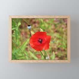 Vivid Red Poppy Framed Mini Art Print