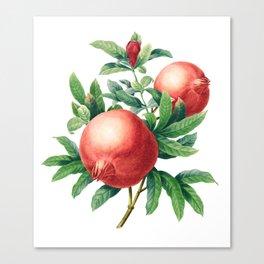 Pomegranate pattern II Canvas Print