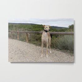 greenhous Metal Print