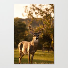 White Tailed Deer In Field Canvas Print