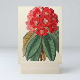 Red Flower Mini Art Print