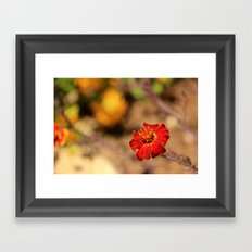 flower from my trip to israel Framed Art Print