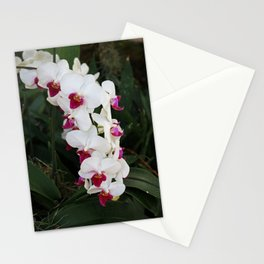 A Parade of Tears Stationery Cards