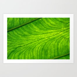 Leaf Paths Art Print
