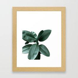 Rubber fig Plant Framed Art Print
