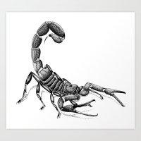 scorpio Art Prints featuring Scorpio by PAgata