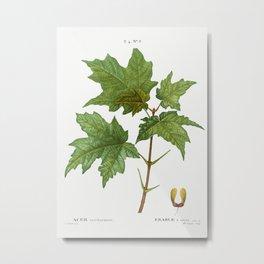 Silver maple, Acer saccharinum from Traité des Arbres et Arbustes que l'on cultive en France en plei Metal Print