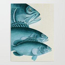 Fish Classic Designs 4 Poster